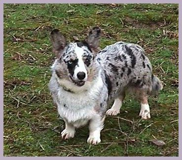 Jupiter In Oaks >> Dogs